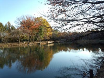 太田ヶ谷沼の秋・・♪