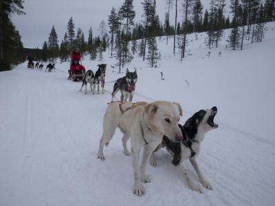2012 フィンランド サーリセルカ オーロラの旅
