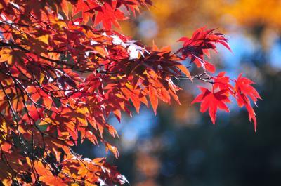 201211 清里に秋を求めて