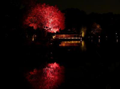 2012清澄庭園ライトアップを味わう