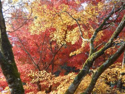 山口市宮野の紅葉を訪ねて(常栄寺雪舟庭と清水寺)