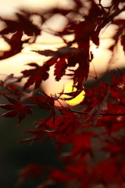 豊後の紅葉