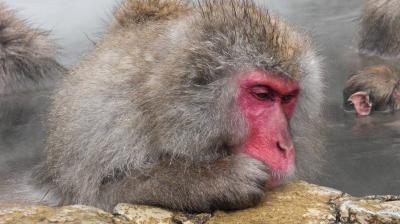 地獄谷野猿公苑でお猿さんの温泉入浴を見に行きました