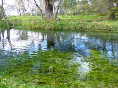 とてつもない規模 安曇野「大王わさび農場」と 泣けるように清らかな川