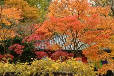 2012年光明院・東福寺・今熊野観音寺・来迎院の紅葉