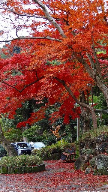 熱海梅園の紅葉 上巻
