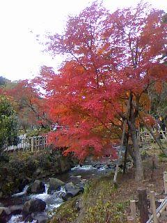 2012 熱海の隠れた紅葉の名所