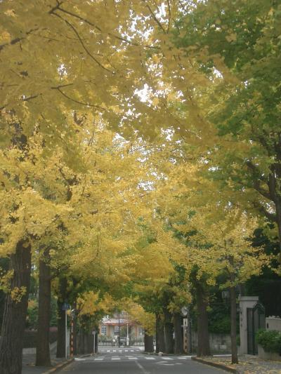 田園調布の銀杏並木。ここもすばらしい東京のスポットです。