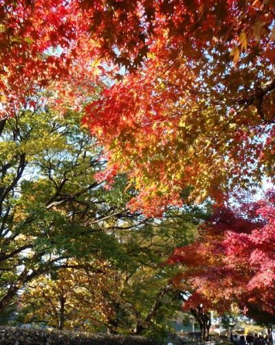 近場で紅葉を楽しもう 名城公園