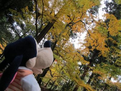 グーちゃん、新潟へ行く!(弥彦で紅葉狩り編)