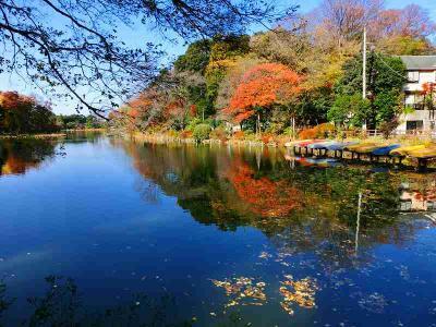 善福寺公園の紅葉を見てきました