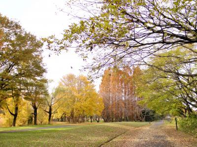 秋ヶ瀬の秋