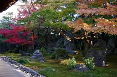 2012 京都紅葉だより まさに穴場の達磨寺