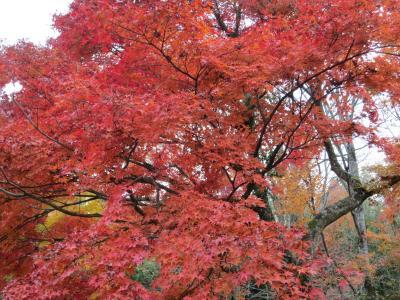 箱根の紅葉と温泉