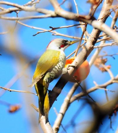 小春日和の鳥