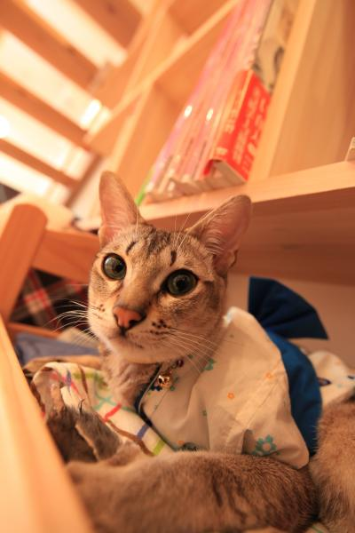 【猫カフェ58】 猫とお昼寝できるカフェ 「てんてん」