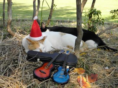 クリスマス CATS