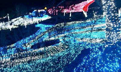 相模湖イルミリオン~光の中を歩く夜