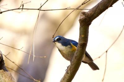 冬鳥の飛来
