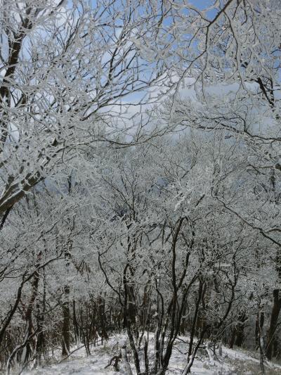 2012登り納め 樹氷の綿向山