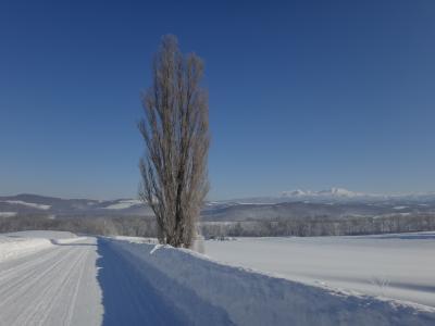 冬の北海道「旭山動物園」「雪景色の美瑛」満喫の旅