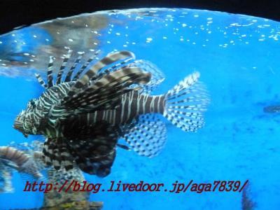 2012年GW 11回目のセブ島 #18 マニラ編 マニラオーシャンパーク逝っちゃいまぁ・・・・・す agaはダイビングできないので ダイビングやらない人で海の中が知りたぁ・・・い人は参考に