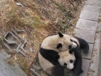 2005年中国成都、パンダと四川料理と異形の仮面