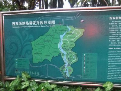 1212⑪孔雀の里と春城 4日目雨の中もたのしい熱帯植物園、この地域の特産はゴム