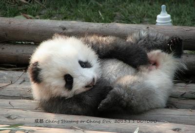 中国陝西省(西安)と四川省(雅安&成都)のパンダちゃんを訪ねて(全体)