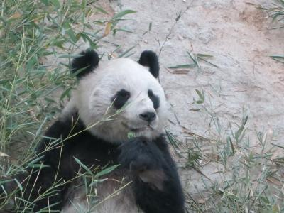 中国陝西省(西安)と四川省(雅安&成都)のパンダちゃんを訪ねて(西安)