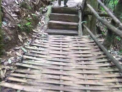 1212⑦孔雀の里と春城 3日目原始森林公園の竹の道を歩く