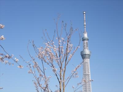 桜とスカイツリーと隅田川ブルーイング