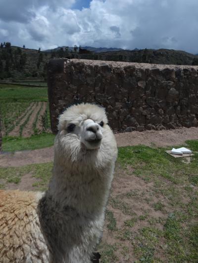(3)2012-2013年末年始ペルー・ボリビア絶景巡り~3日目プーノ~
