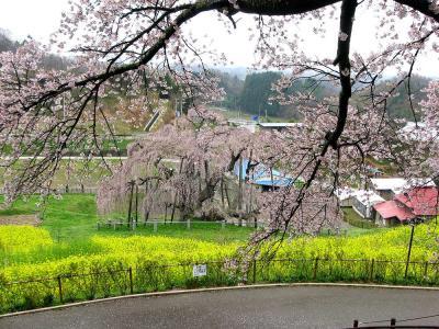 日本の花紀行・桜の名所をたずねてー(1)東北編