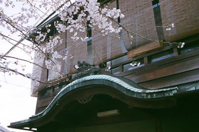 京の都 五条楽園から祇園界隈は春爛漫のぶらぶら歩き旅