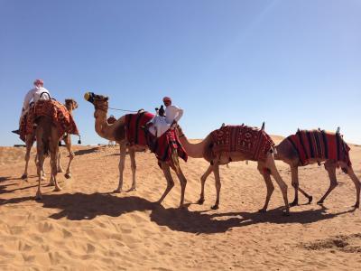 庶民でも満喫できた! ドバイとアブダビ旅行⑧ -モーニング・サファリ ー