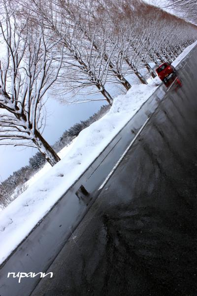 メタセコイア並木・メモリー 季節の移ろいともに 滋賀・マキノ高原