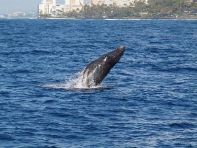 0歳児連れ家族ハワイ旅行(クジラ、サブマリン、KCCマーケット編)