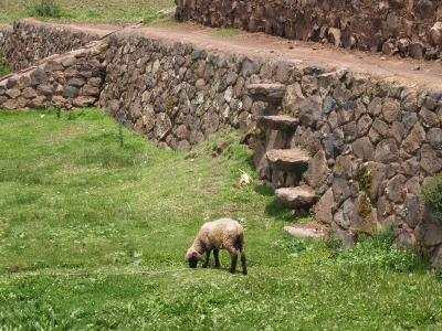 ペルー・メキシコの旅 その4 インカエクスプレスでクスコからプーノへ
