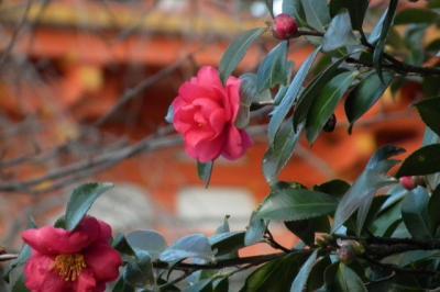 京の冬の旅 仁和寺金堂と五重塔!2013年