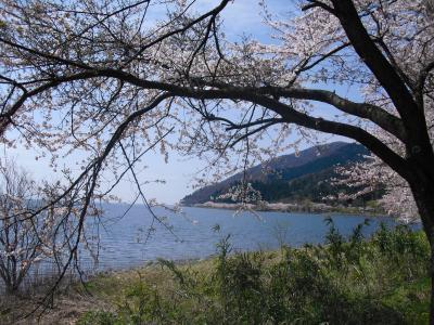 琵琶湖のお花見スポット