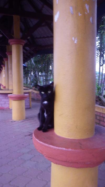2 Singapore シンガポールからの週末エスケープ、Hadyaiハジャイ+Kota Bharuコタバル、Nov,2012、犬と猫と宿酔いオヤジ