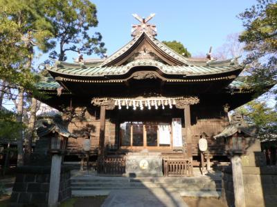 今年も荏原神社の寒緋桜は遅れ気味 2013