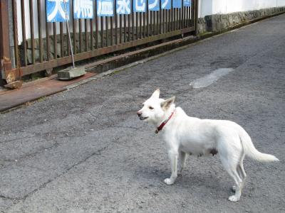 2013冬暇 大阪帰省(1)関空から犬鳴山温泉につかり