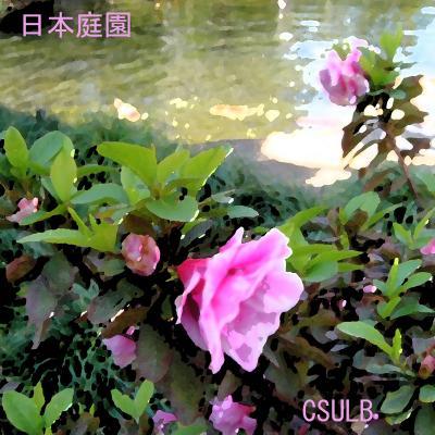 2013 カリフォルニア州立大学ロングビーチ校の 日本庭園