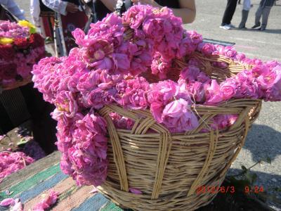 世界遺産ブルガリア・番外編  バラ祭り①バラ畑