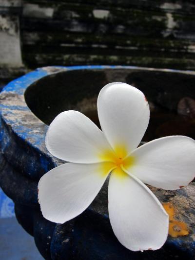 北タイの25寺院&北タイのグルメ旅 in チェンマイ★2011 14 7日目【CNX】