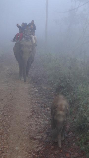 象に乗って、早朝のチトワン国立公園でサファリ 上巻