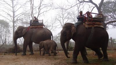 象に乗って、早朝のチトワン国立公園をサファリ 下巻