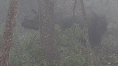 象に乗って、早朝のチトワン国立公園でサファリ 中巻